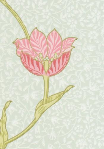 MOR_Garden-Tulip_210394
